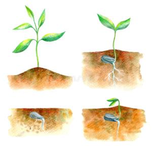 Удобрения и грунты