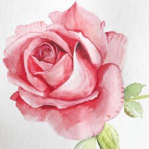 Роза Уральская